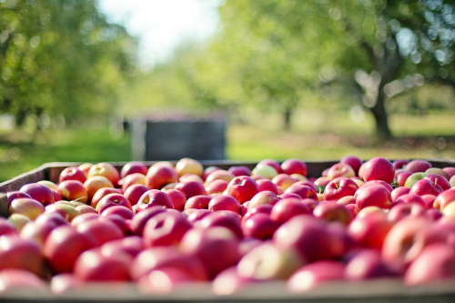 Apples-crate